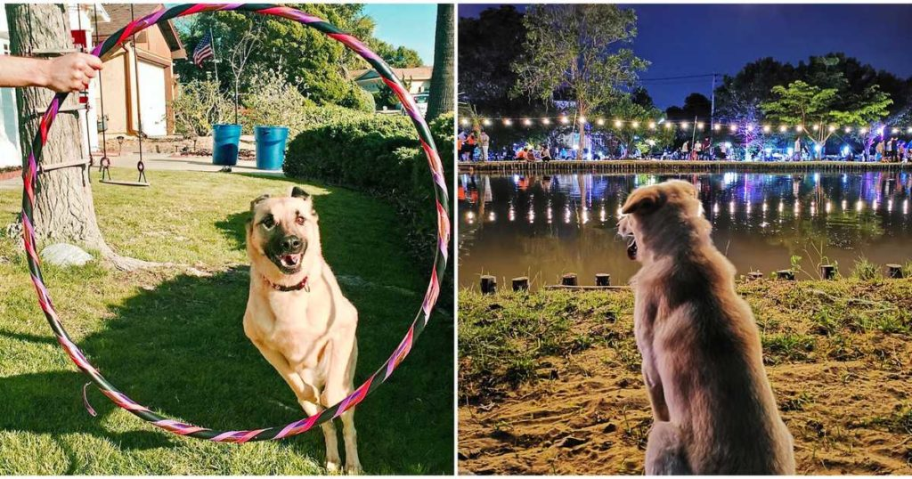 coachella-for-dogs