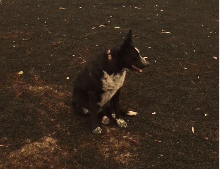 patsy-wonder-dog