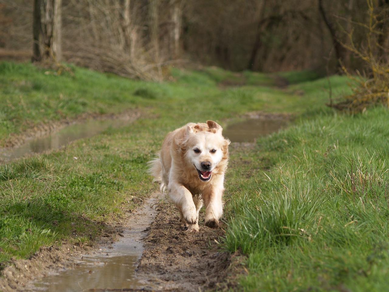 dog, run, green