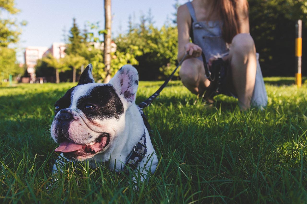 animal, canine, close-up