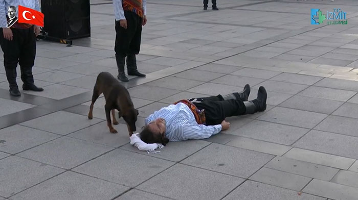 street-performance-dog
